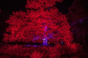 Fotomurales - Illuminated Tree Growing In Park At Night