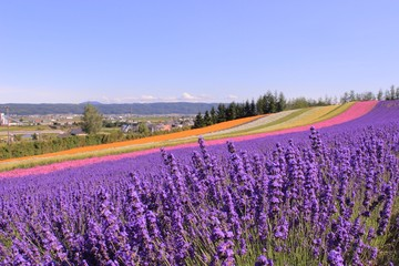 Colorful Flowers Blooming On Field Against Sky