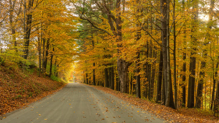 Autumn leaves on country road near Woodstock Vermont