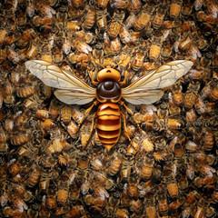 Giant Hornet Predator Attacking Bees