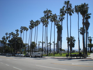 Wall Murals Los Angeles Low Angle View Of Coconut Palm Trees By Street Against Sky On Sunny Day