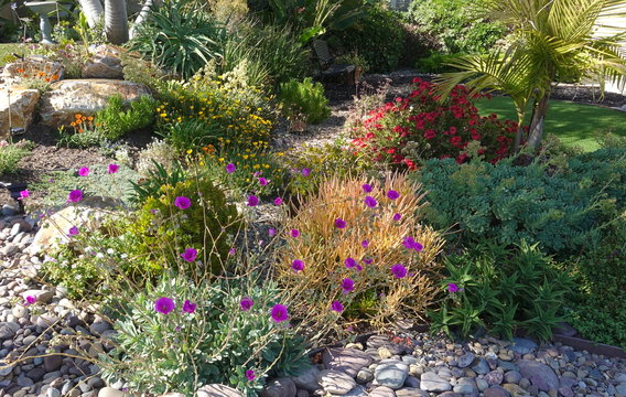 Shrubs and succulents in bloom in a drought tolerant landscaping.