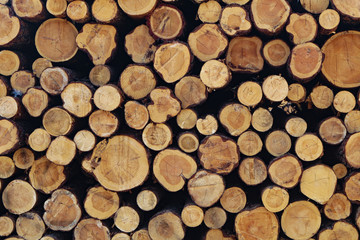 Wooden background, a lot of wood from round timber.