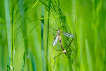 Libellen im Gras