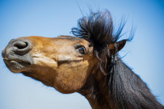 Lucky das Connemara Pferde macht quatsch