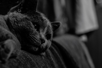 Obraz Close-up Of Cat Relaxing On Bed - fototapety do salonu