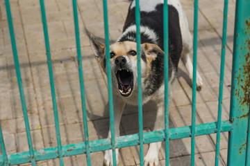 Fototapeta Homeless dog behind bars of a dog shelter.