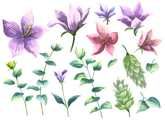 Watercolor drawing, Flowers and Leaves