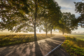 Idyllic Country Road At Sunset In Germany Fotomurales