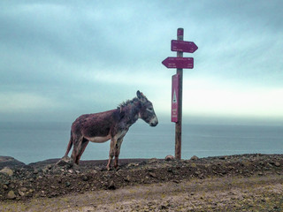 Donkey Standing By Road Sign Against Sea And Sky