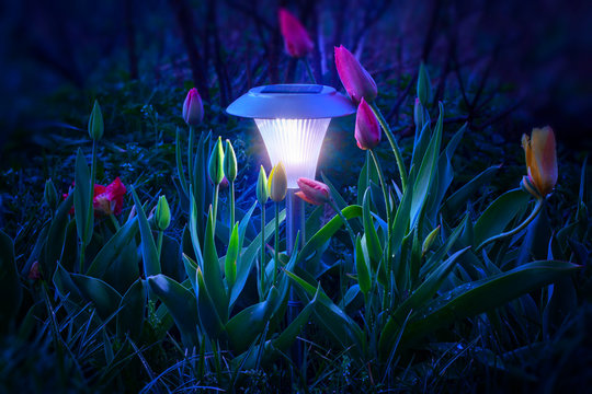 Mystical light from a flashlight with a solar panel illuminates tulips at night.