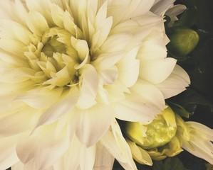 Fotobehang Full Frame Shot Of White Flowers