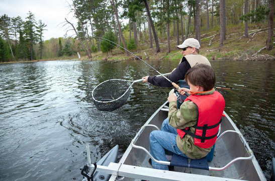 A dad nets a walleye that his son caught on a lake in northern Minnesota