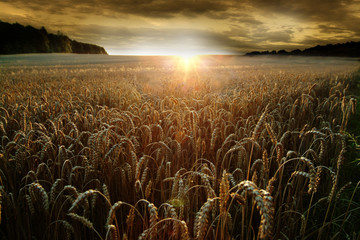 Crops Growing On Agricultural Field Against Sky During Sunset Fototapete