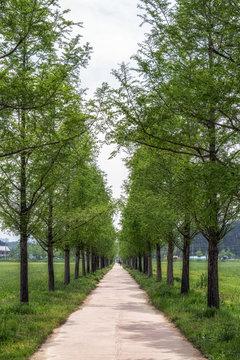 Gyeongpo ecological reservoir park