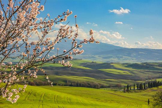 Cherry Tree On Field Against Blue Sky