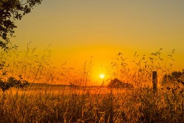 Foto auf AluDibond Honig Idyllic Shot Of Landscape Against Orange Sky During Sunset