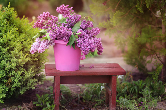 Lilac bouquet in a pink bucket. Romance