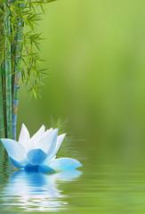 Composition aquatique avec bambous et lotus bleu