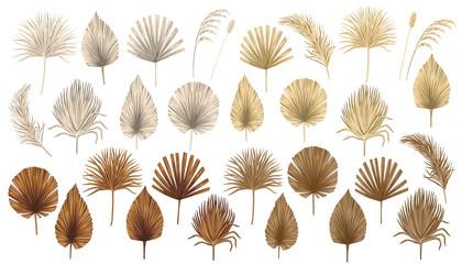 Tropical boho dried palm leaves floral clip art. Exotic jungle botanical print.