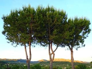 Foto auf AluDibond Licht blau Trees On Landscape Against Sky