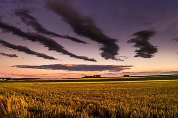 Foto auf Gartenposter Aubergine lila Idyllic Shot Of Green Landscape Against Sky During Sunset