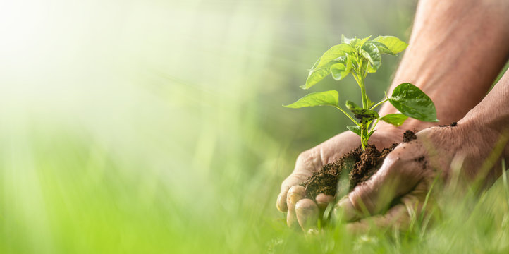 Banner view of sustainability expressed by green environment and seedlings in hands