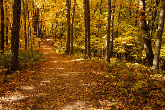 A shaded hiking trail through the woods within the Pike Lake Unit, Kettle Moraine State Forest, Hartford, Wisconsin in early October.
