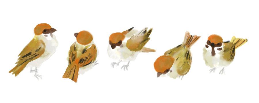 House sparrow,vector illust like watercolor