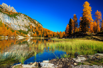 Fototapete - Federa lake with yellow larches in background, Dolomites, Italy