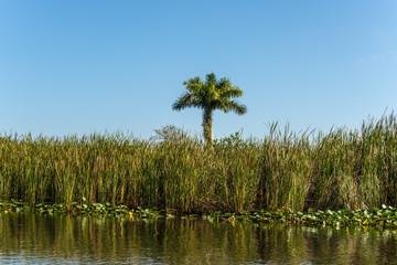 Florida wetland, natural landscape in Everglades National Park