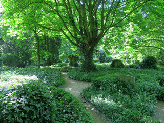 old cemetery in Amsterdam with gravestones covered with ivy