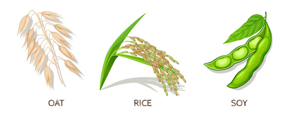 Oat, Rice, Soy Icon Set. Vector Illustration.
