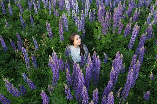 Lupinus. Bohemian girl. Field of purple, lilac lupines flowers, summer day in village near Smolensk city, Russia. Russian countryside nature. Bloom of lupinus texensis. Lupin flowers on meadow. Lupins