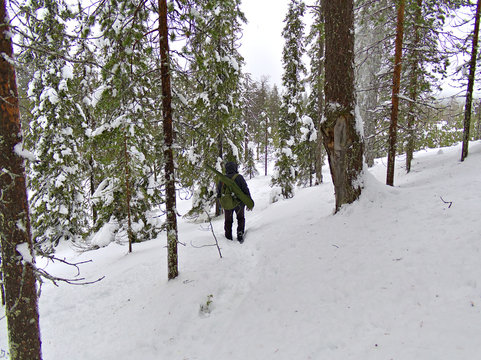 Lonely hunter walking in snow covered taiga forest in Lapland, Finland