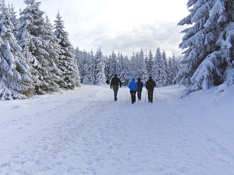 Group of people walking in snow covered forest in Ramzova, Czech Republic