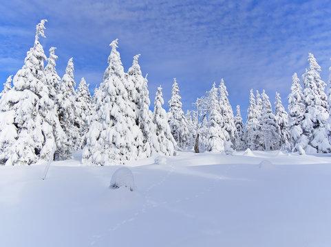 Beautiful snow covered forest in Ramzova, Czech Republic