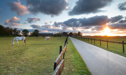Wall Mural - beautiful sunset over meadow with grazing horses