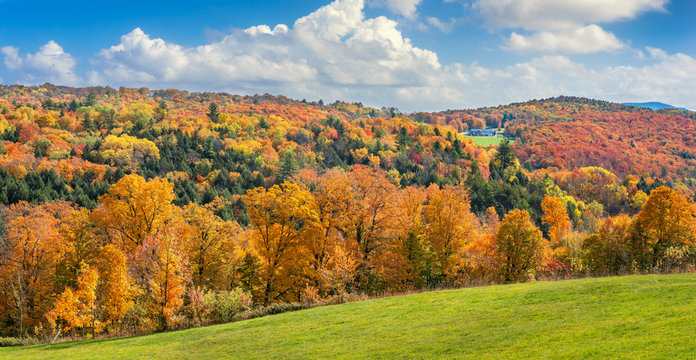 Brilliant golden fall colors in Vermont Countryside farm during Autumn near Woodstock