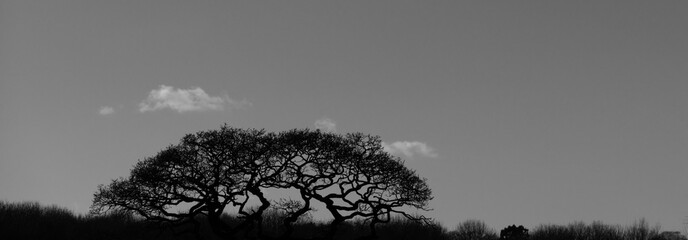 Foto auf AluDibond Grau Panoramic Shot Of Silhouette Trees On Landscape