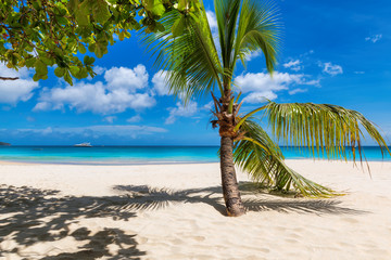 Wall Mural - Palm trees on tropical beach. Summer vacation and tropical beach concept.