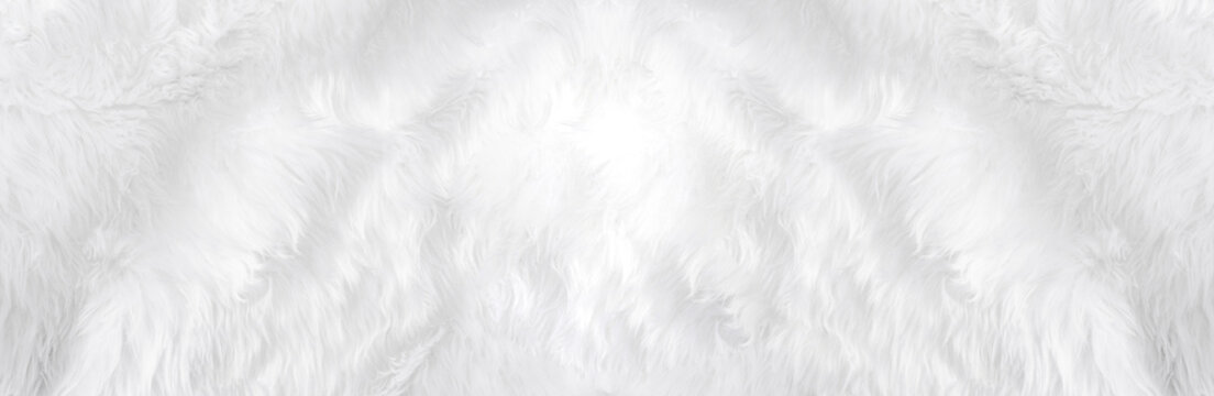 Wide animal white wool sheep background in top view light natural. Grey fluffy seamless cotton panoramic texture. Wrinkled lamb fur coat skin, rug mat raw material,  fleece woolly textile concept