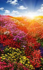 Fototapete - Landscape of flower field