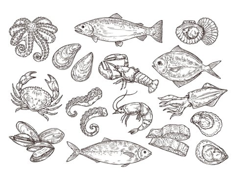Seafood sketch. Vintage fish, drawing food. Delicious shrimp, shell squid. Sea cuisine, grilled crab calamari. Fresh raw market vector set. Seafood ocean, fish shrimp, shellfish mollusk illustration