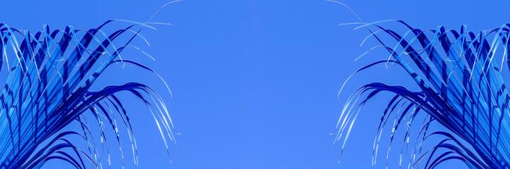 Papiers peints Palmier Palmes bleues sur fond bleu