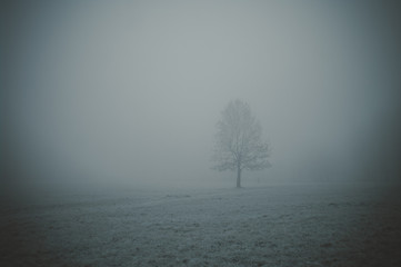 Foto auf AluDibond Dunkelgrau Bare Tree On Snow Covered Landscape Against Sky