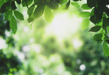 Canvas Prints Green Closeup beautiful view of nature green leaves on blurred greenery tree background with sunlight in public garden park. It is landscape ecology and copy space for wallpaper and backdrop.