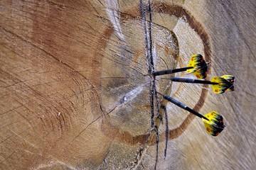 Fototapeta drewniana tarcza obraz