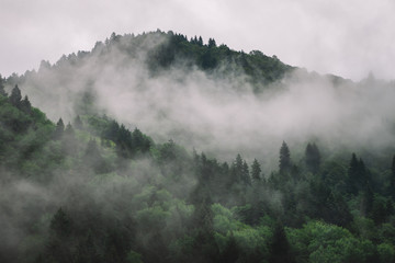 Fotobehang Bossen Foggy Spruce Forest In The Mountains. Dark and Misty Wood Landscapes