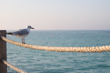 One seagull sits on a rope fence on a beach in Dubai